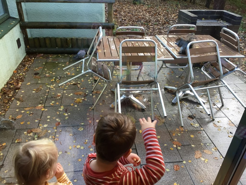 Enjoying the wildlife from our Center Parcs lodge